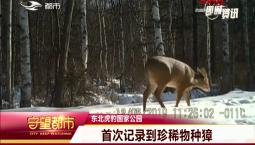 守望都市 东北虎豹国家公园:首次记录到珍稀物种獐