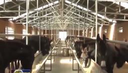 通化市2019年新建成20个精品牧业小区