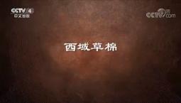 《史話新疆》 第十三集 西域草棉