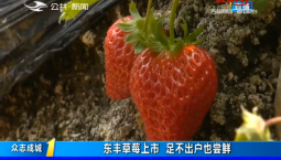 第1报道|东丰草莓上市 足不出户也尝鲜