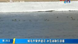 第1报道|候鸟齐聚伊通河 冰雪消融引游客