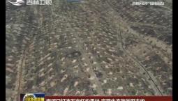 梅河口打造万亩红松果林 实现生态效益双丰收