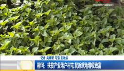 新闻早报|柳河:扶贫产业落户村屯 就近就地增收致富