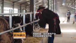 西藏那曲:现代畜牧产业为牲畜健康保驾护航