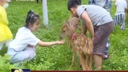 东丰县被授予中国观展梅花鹿驯化基地称号