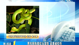 第1報道|男孩網購毒蛇當寵物 結果被咬傷