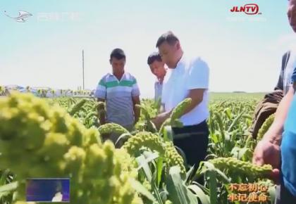 【不忘初心 牢记使命】吉林省农业农村厅: 扎实推进实施乡村振兴战略