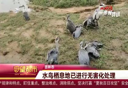 守望万博官网manbetx客户端|大风袭击鸟类栖息地 大量水鸟伤亡