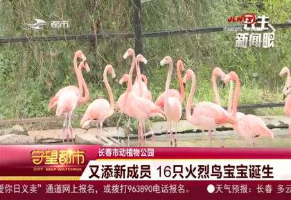 守望都市 长春市动植物园又添新成员 16只火烈鸟宝宝诞生
