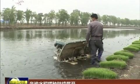 各地水稻插秧陆续展开