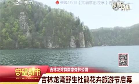 吉林龙湾野生杜鹃花卉旅游节启幕