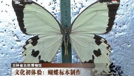 文化初体验:蝴蝶标本制作