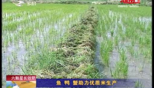 乡村四季12316_鱼 鸭 蟹助力优质米生产