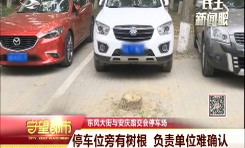 停车位旁有树根 负责单位难确认