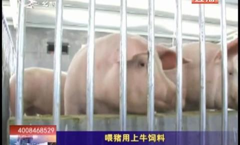 乡村四季12316_喂猪用上牛饲料
