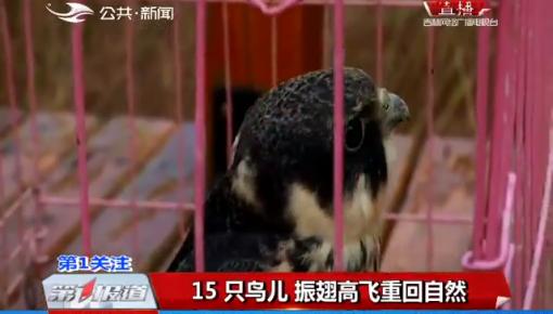 15只鸟儿 振翅高飞重回自然