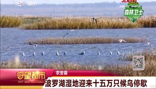 波罗湖湿地迎来十五万只候鸟停歇