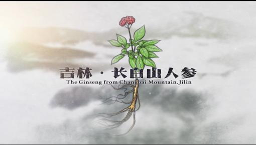 【微視頻】吉林·長白山人參