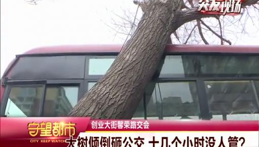 守望都市|大树倾倒砸公交 十几个小时没人管?