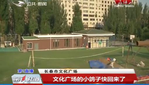 第1报道|文化广场的小鸽子快回来了