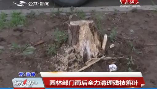 第1報道|園林部門雨后全力清理殘枝落葉
