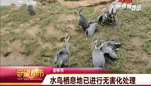守望都市|大风袭击鸟类栖息地 大量水鸟伤亡
