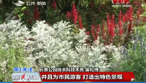 第1报道|长春公园70万株野花进入盛花期