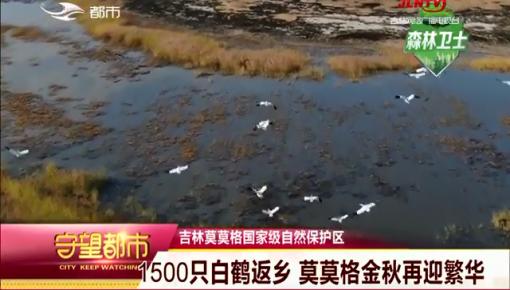 守望都市|莫莫格自然保护区迎1500只白鹤驻足