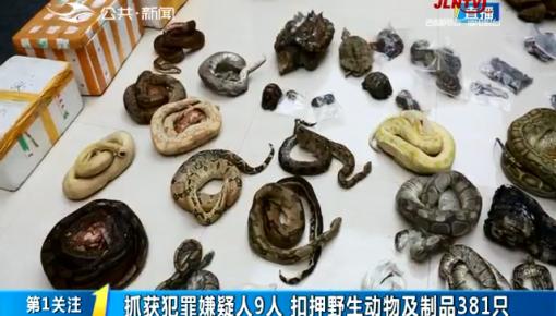 第1报道|省森林公安破获收购出售濒危野生动物制品案