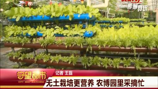 守望都市|長春市:無土栽培更營養 農博園里采摘忙