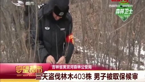 守望都市|吉林省:三天盗伐林木403株 男子被取保候审