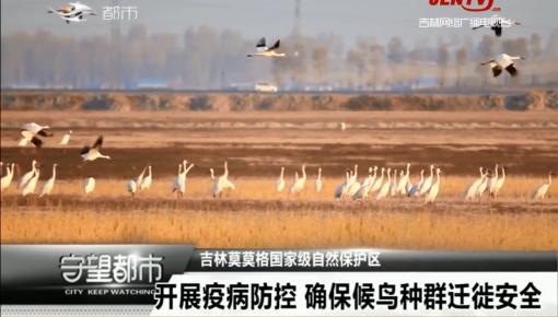 守望都市 开展疫病防控 确保候鸟种群迁徙安全
