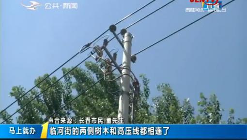 第1报道 树木连接高压线 居民担心存隐患