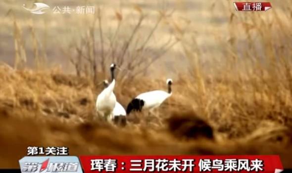 【独家视频】珲春:三月花未开 候鸟乘风来