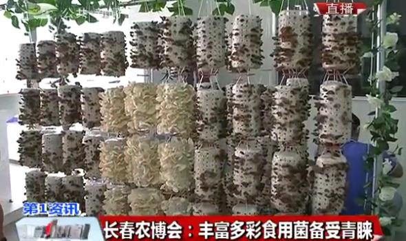 【独家视频】长春农博会:丰富多彩食用菌备受青睐
