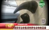 吉林省森林公安局破获非法收售濒危野生动物制品案