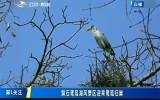 第1報道|磐石鷺鷥湖風景區迎來鷺鷥歸巢