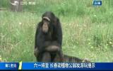 第1报道|六一将至 长春动植物公园发布游玩提示