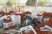 洮南——辣椒为什么这样红