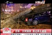 吉林:大树倾倒 路边两车被砸