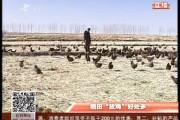 """乡村四季12316_稻田""""放鸡""""好处多"""