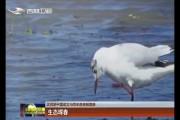 【庆祝新中国成立70周年微视频展播】生态珲春