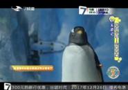 7天游记_玩珠海长隆——企鹅奇缘