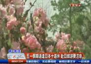 第1報道|五一假期適逢日本十連休 赴日旅游要注意