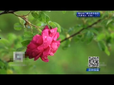 吉林报道|专题《风雅通化-玫缘》(上)