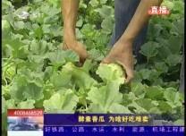 乡村四季12316_酵素香瓜 为啥好吃难卖