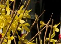 都市融媒出品|春暖·花開