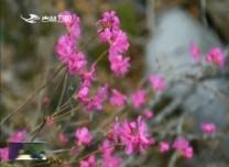 最美吉林|汪清蘭家大峽谷