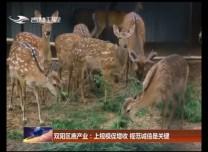 雙陽區鹿產業:上規模促增收 規范誠信是關鍵