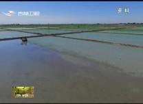 水稻成熟季 农民收割忙